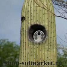 Город в Аризоне спрятал дорожные камеры в кактусах